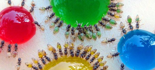 Прозрачные цветные муравьи (3 фото)