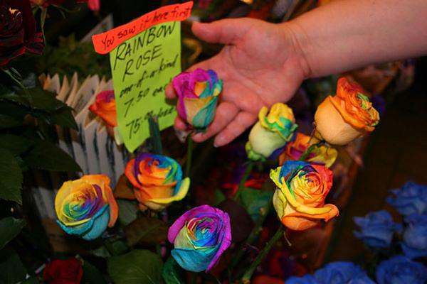 Роза окрашенная во все цвета радуги
