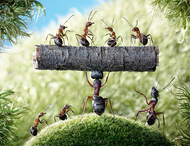 Фотограф Андрей Павлов и его муравьи