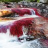 Кристальная река Каньо Кристалес (13 фото)