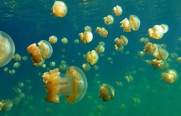 Озеро Медуз на Палау
