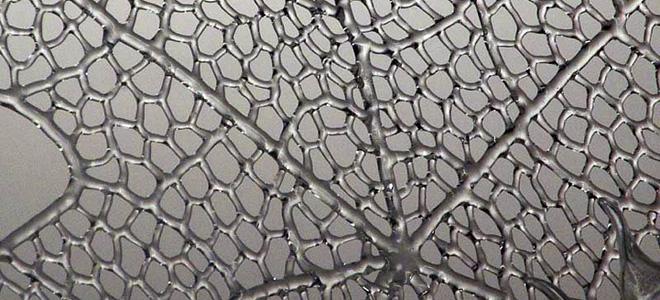Роберт Микелсон и его стеклянные паутины (19 фото)
