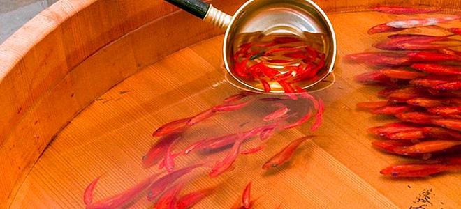 Рюсуке Фукахори и его трехмерные золотые рыбки (13 фото)