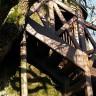 Удивительные часовни внутри дуба (11 фото)
