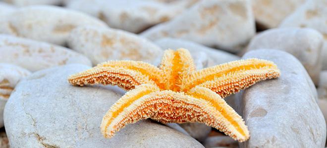 Морские звезды — загадочные обитатели глубин (17 фото)