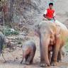 Розовые слоны Мьянмы (3 фото)