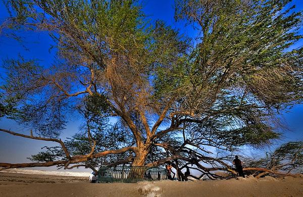 Дерево Жизни в Бахрейне
