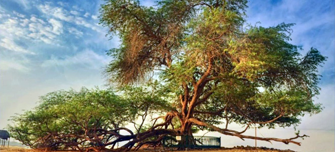 Дерево Жизни в Бахрейне (5 фото)