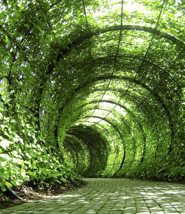 Сад ядовитых растений Альнвика