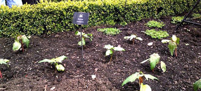 Сад ядовитых растений Альнвика (7 фото)