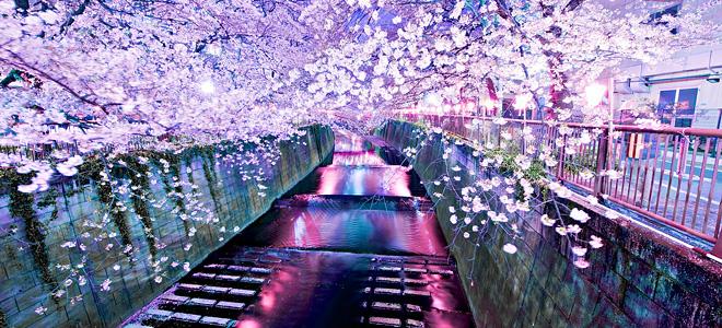 Картинки по запросу картинки про японию и сакуру