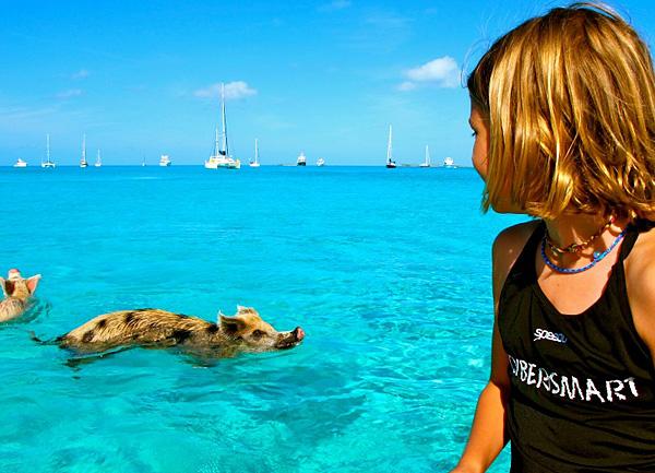 Плавающие свинки острова Биг Мэйджор Кэй