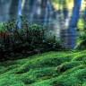 Сад мхов в монастыре Сайходзи (9 фото)