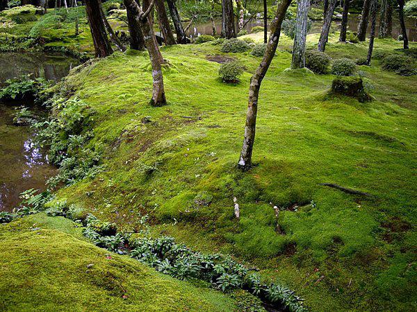 Сад мхов в монастыре Сайходзи
