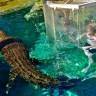 «Клетка Смерти» в парке «Крокодилья бухта» (9 фото)
