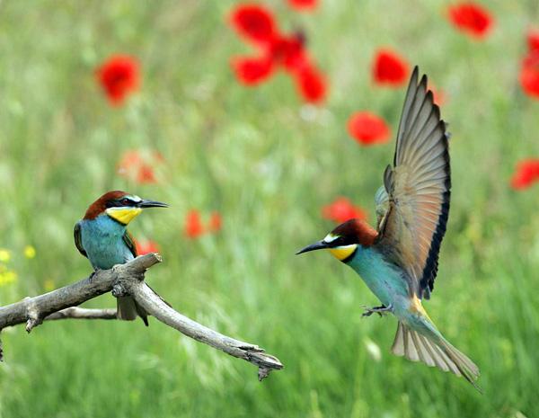 Самая маленькая птичка в мире Колибри