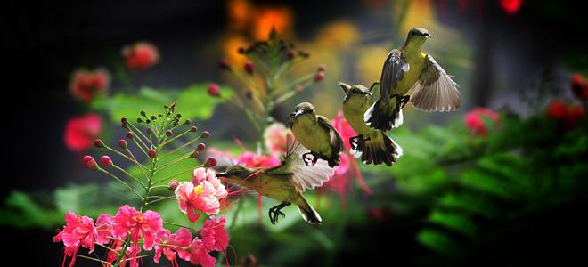 Колибри — самая маленькая птичка в мире (13 фото)