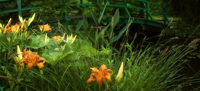 Сад Клода Моне в Живерни (11 фото)