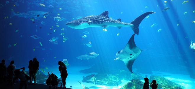 Аквариум Джорджии — самый большой в мире (11 фото)