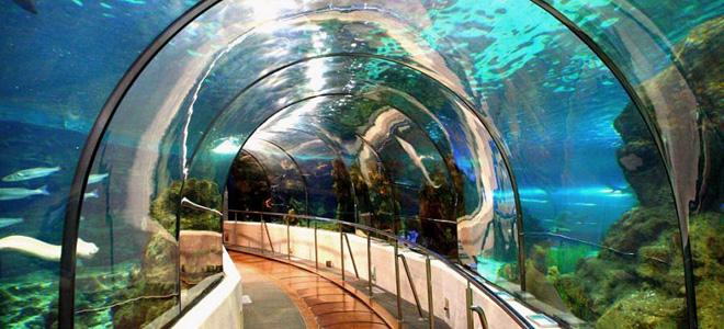 L'Aquarium Barcelona в Барселоне (5 фото)