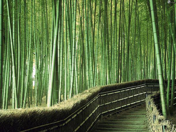 Бамбуковый лес Сагано в Киото (1)
