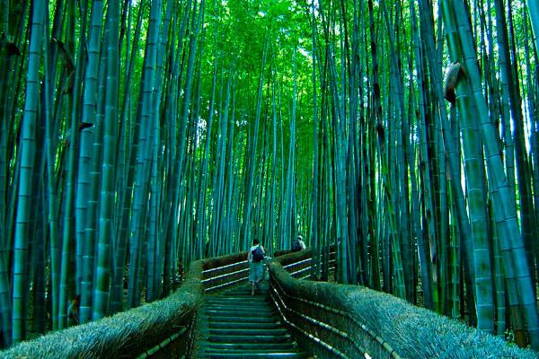 Бамбуковый лес Сагано в Киото (6)