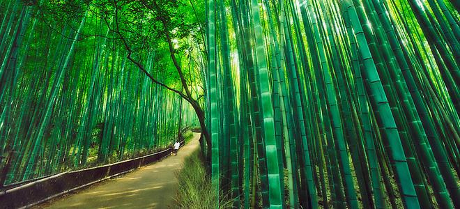 Бамбуковый лес Сагано в Киото (9 фото)