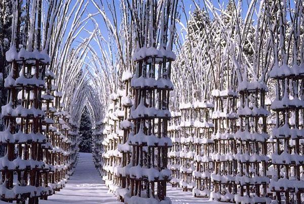 Собор из живых деревьев Cathedral Vegetale в Бергамо
