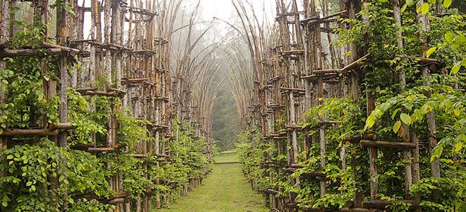 Cathedral Vegetale — собор из живых деревьев (11 фото)