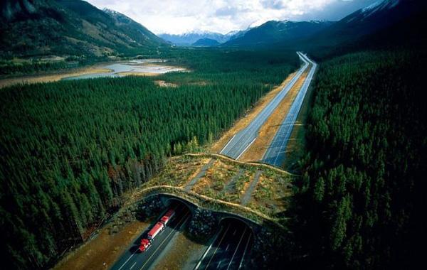 Мосты и тоннели для животных Экодуки