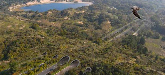 Экодуки — мосты и тоннели для животных (13 фото)