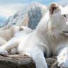 Легендарный белый лев