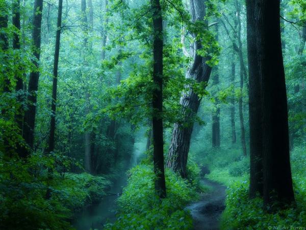 Неллеке Питерс и ее чарующие лесные пейзажи