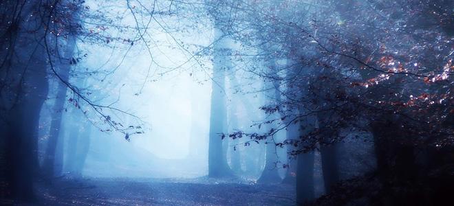Неллеке Питерс и ее чарующие лесные пейзажи (15 фото)