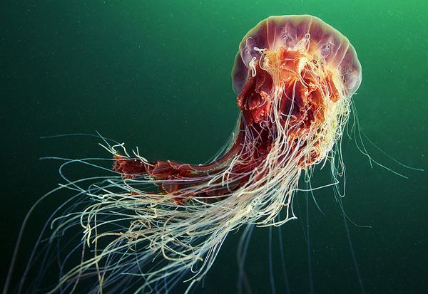 Александр Семенов и его подводный мир