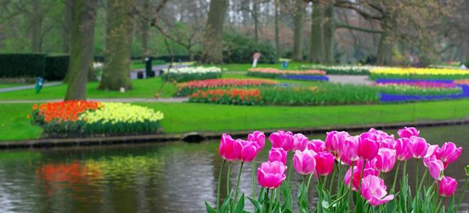 Парк цветов Кейкенхоф в Амстердаме (15 фото)