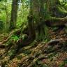 Пазлвуд — лес загадок в Англии (17 фото)