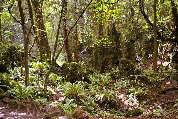 Загадочный лес Пазлвуд в Англии (9)