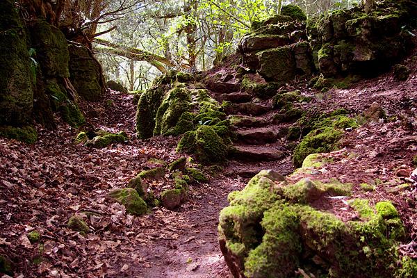 Загадочный лес Пазлвуд в Англии (8)