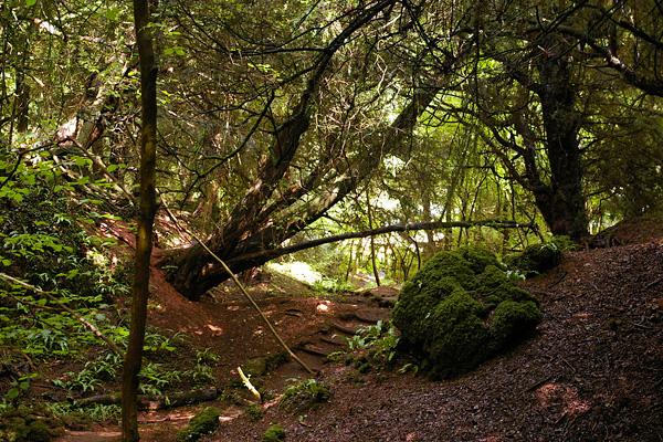 Загадочный лес Пазлвуд в Англии (7)