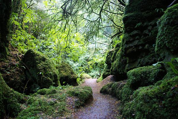 Загадочный лес Пазлвуд в Англии (6)
