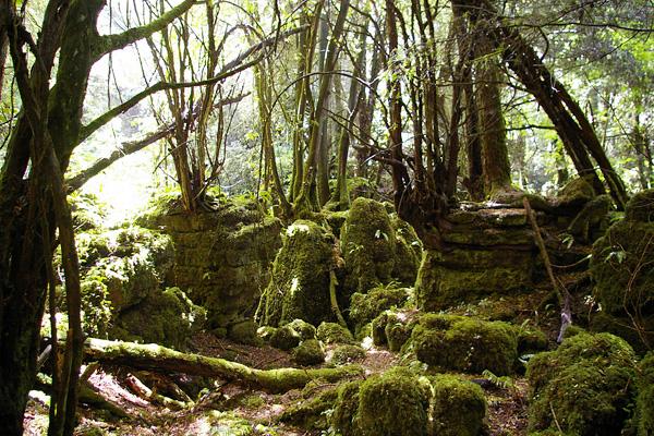 Загадочный лес Пазлвуд в Англии (5)