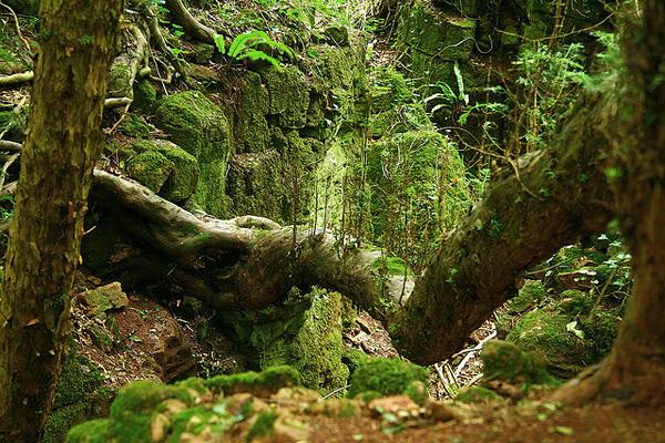 Загадочный лес Пазлвуд в Англии (4)