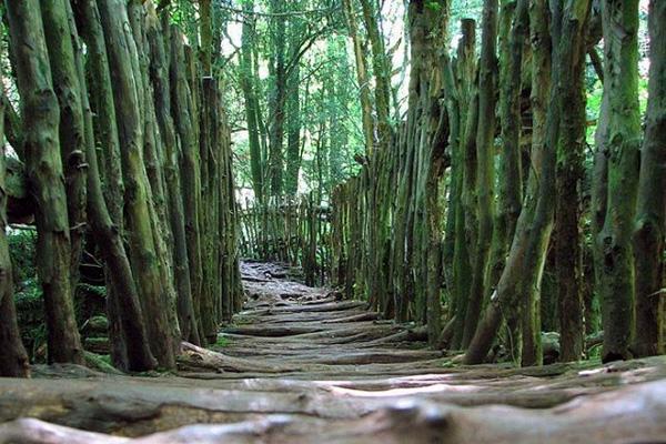 Загадочный лес Пазлвуд в Англии (3)