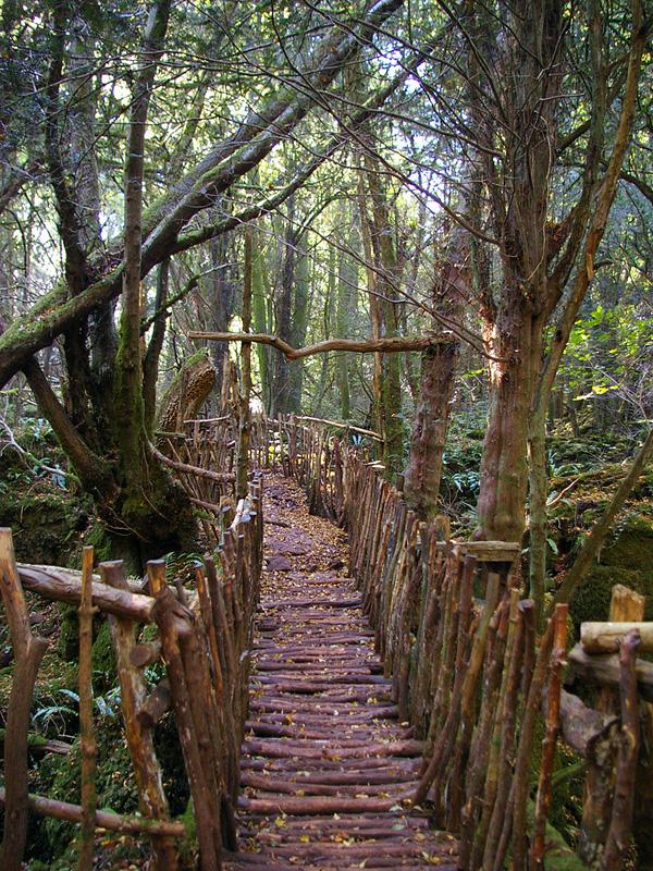 Загадочный лес Пазлвуд в Англии (2)