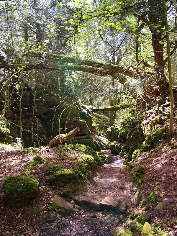 Загадочный лес Пазлвуд в Англии (1)