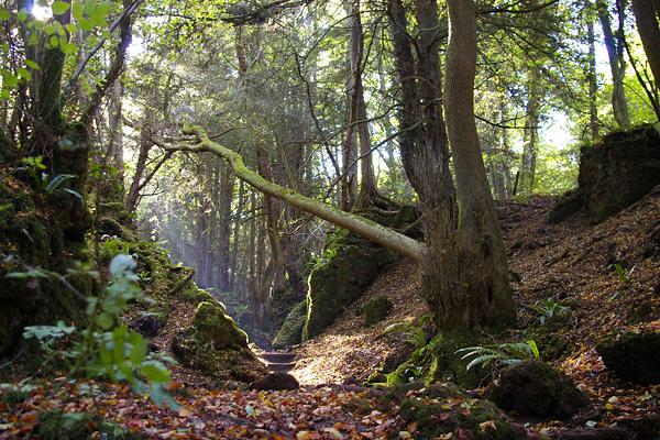 Загадочный лес Пазлвуд в Англии (17)