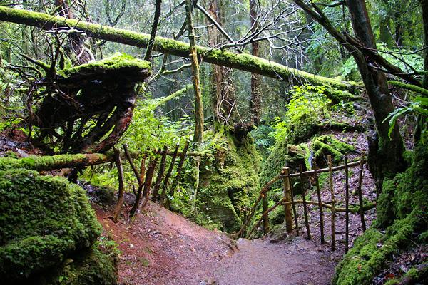 Загадочный лес Пазлвуд в Англии (16)