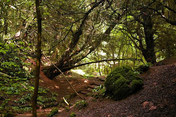 Загадочный лес Пазлвуд в Англии (15)