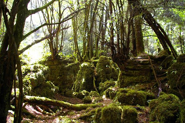Загадочный лес Пазлвуд в Англии (13)